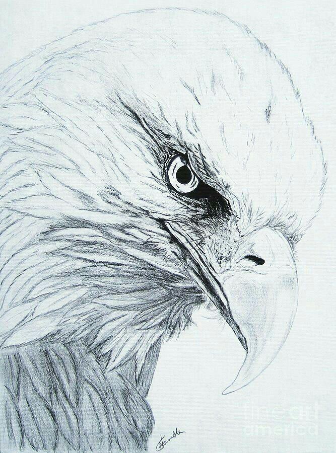 Pin de Susan Carrell en Eagle sketches   Pinterest   Cosas para ...