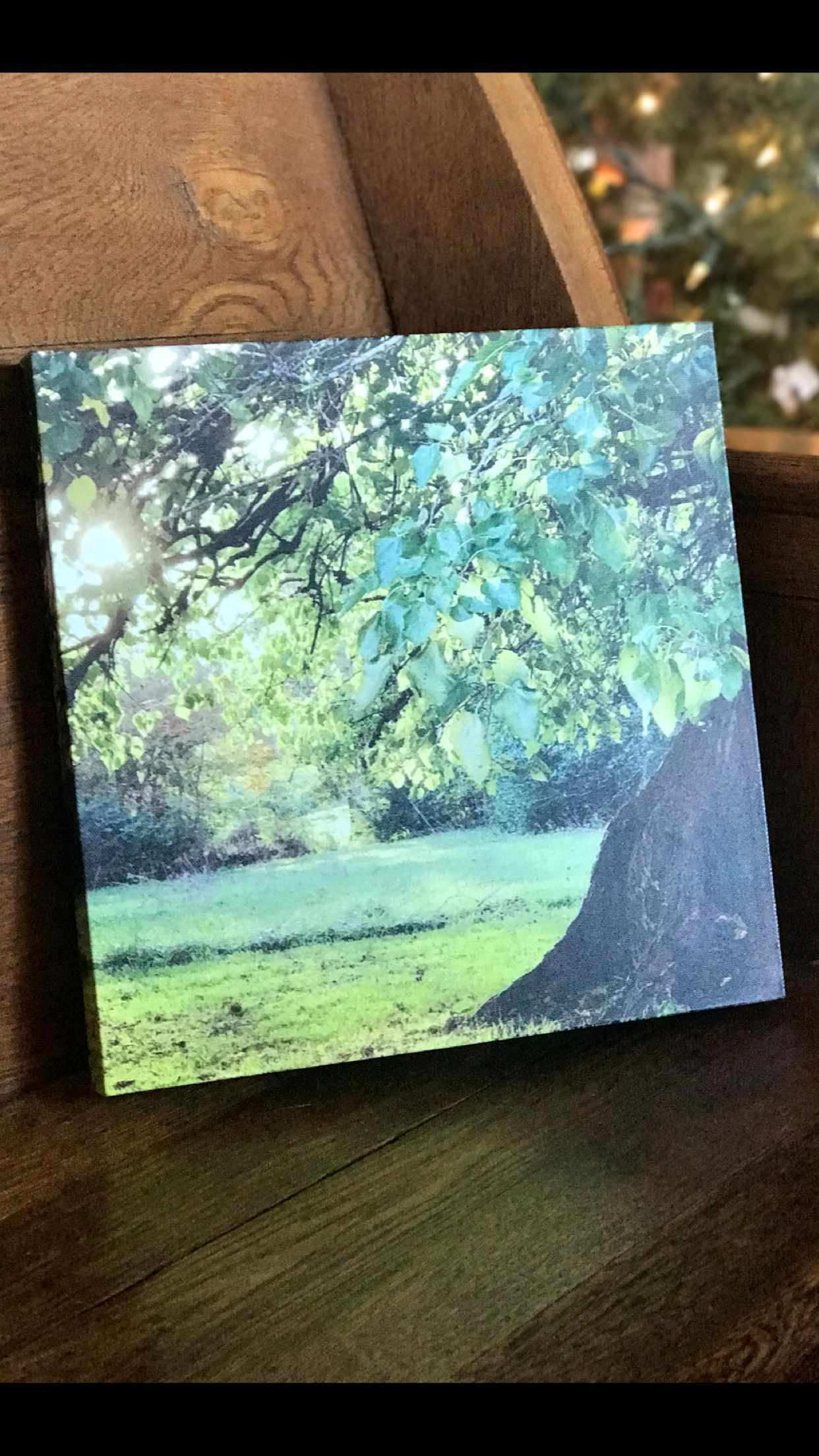 Mulberry Tree In Summer, Farm Photography, Farmhouse Decor, Large Wall Art,  Fine