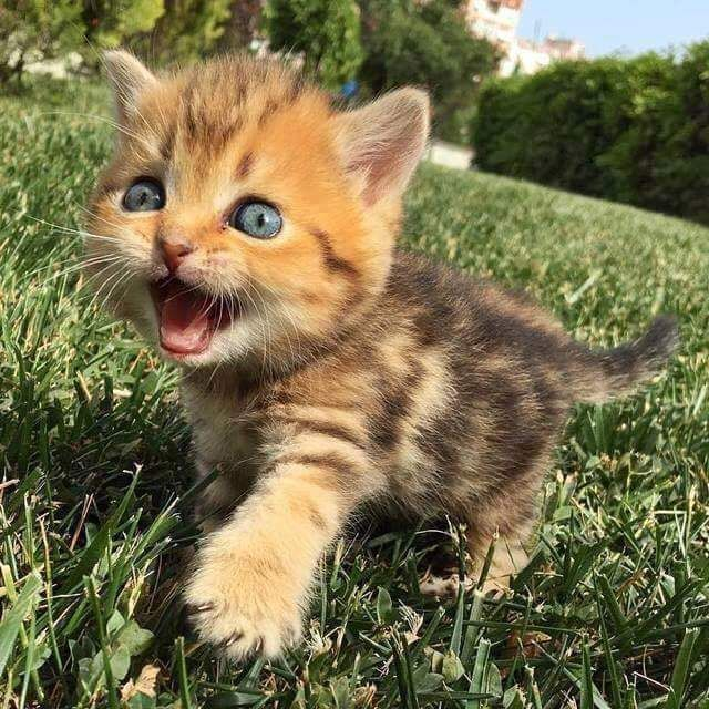 Just Look At This Exciting Little Floofball Kittens Cutest Cute