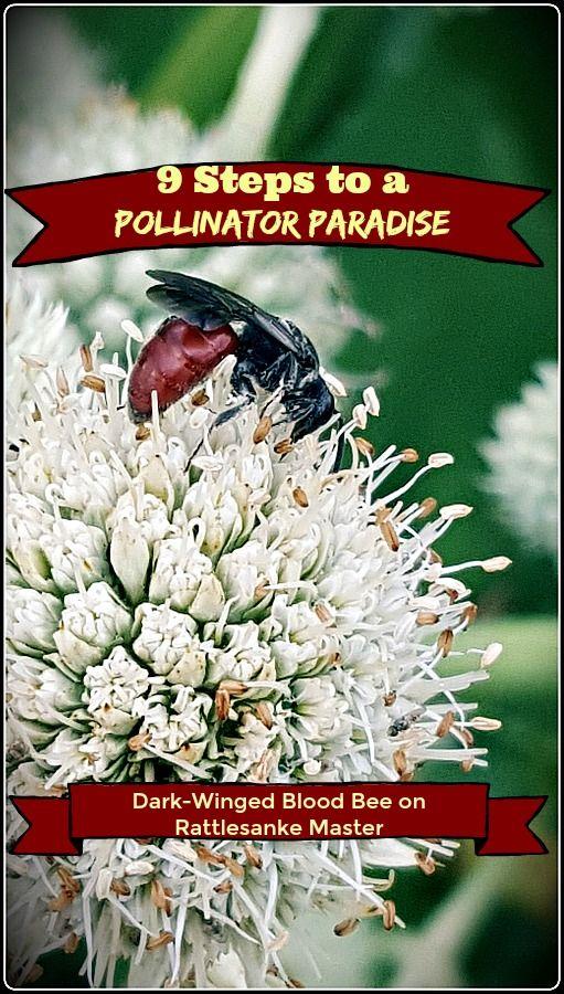 9 Steps to a Pollinator Paradise Pollinator garden
