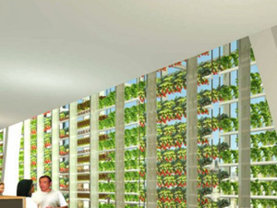 vertical farming turning agriculture upside down essay How to make a wicking bed  below is a photo essay outlining the process of creating a  and it occurred to us that we could use them upside down to create a.
