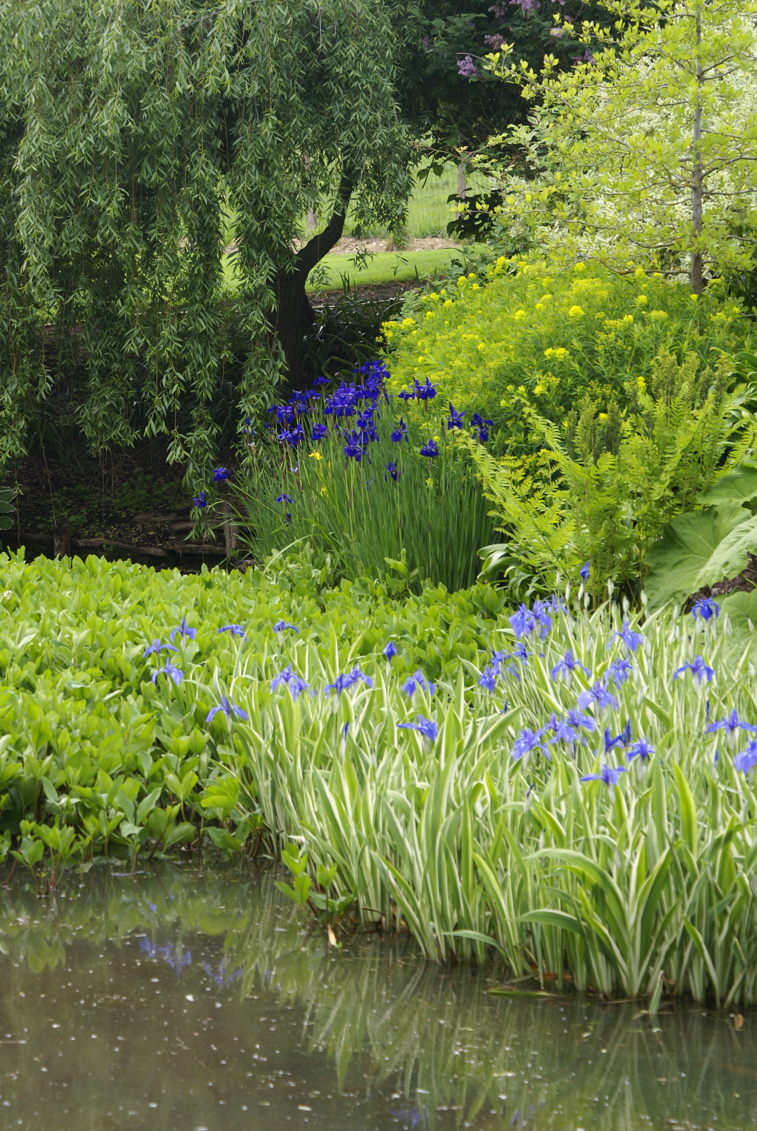 Bordure D Un Etang Amenage Jardin D Eau Bassin De Jardin Beaux Jardins