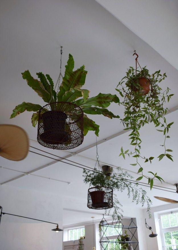 Bourne & Hollingsworth Buildings London restaurant interiors bloggers guide botanical hanging plants