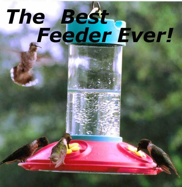Dr Jbs Original Hummingbird Feeder Said To Be The Best Hummingbird Feeder Humming Bird Feeders Feeder Hummingbird Bird Bath