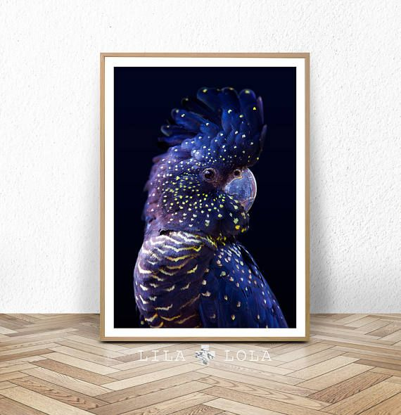 Black Cockatoo Print, Large Wall Art, Contemporary Prints, Printable  Poster, Digital Download, Bird Photography, Navy Blue Wall Art, Nature