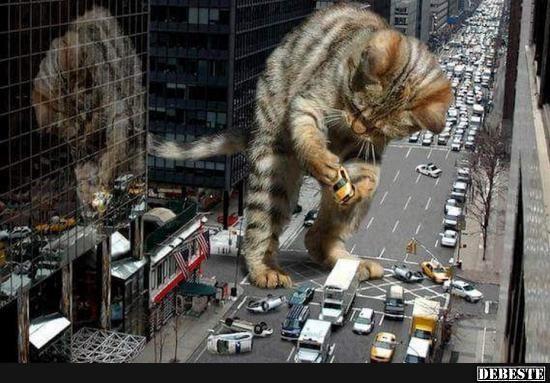 Catzilla!   Lustige Bilder, Sprüche, Witze, echt lustig