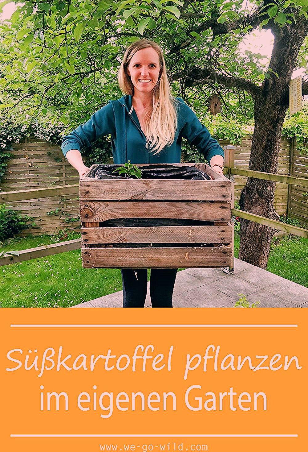 Photo of Süßkartoffel pflanzen im eigenen Garten – WE GO WILD