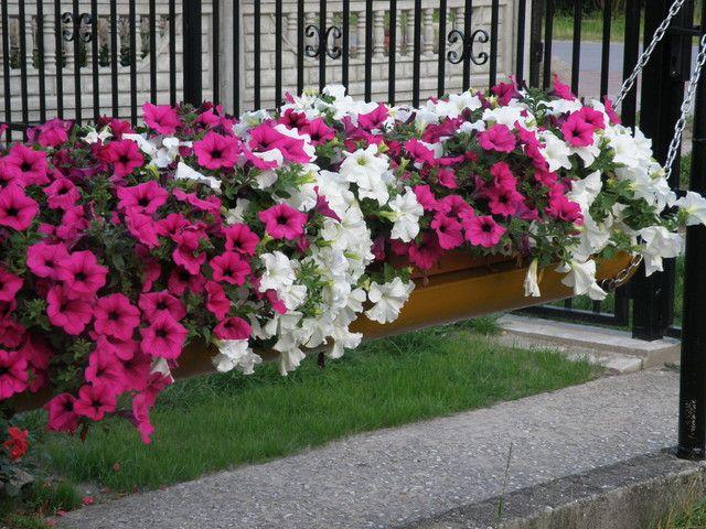 Ozdabiamy Balkony Forum Plants Garden Flowers