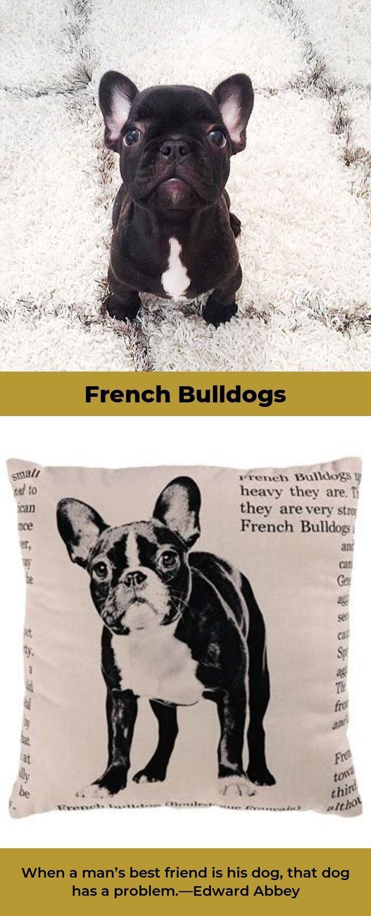 French Bulldog #frenchbulldoglove #frenchbulldogofinstagram   French  bulldog, Merle french bulldog, French bulldog blue