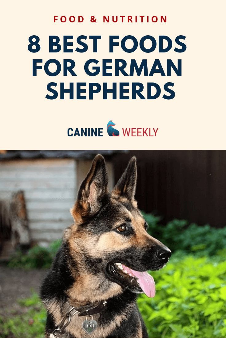 8 Best Dog Food for German Shepherds [2020 Reviews