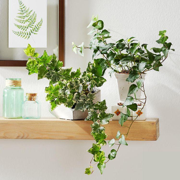 Gutes Raumklima 10 Pflanzen, die fürs Schlafzimmer