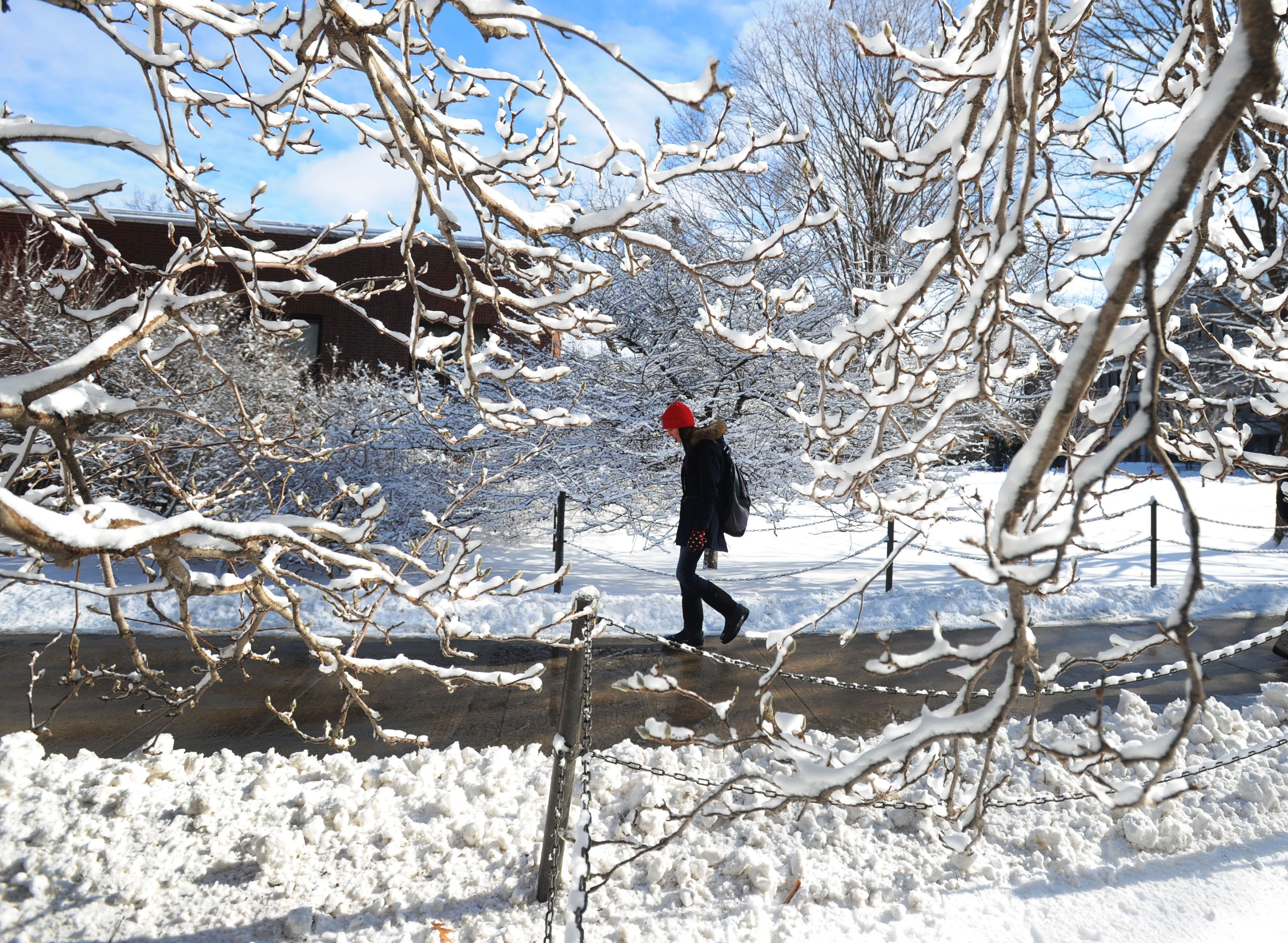 An Iowa State University Student Walks Past Snow Covered Trees On