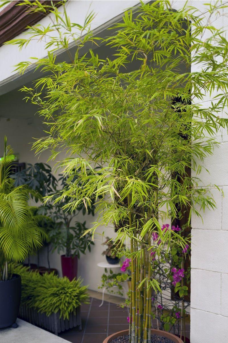 Cottage Garten Im Topf Anlegen In 2020 Winterharte Pflanzen Fur Balkon Kubelpflanzen Winterharte Pflanzen
