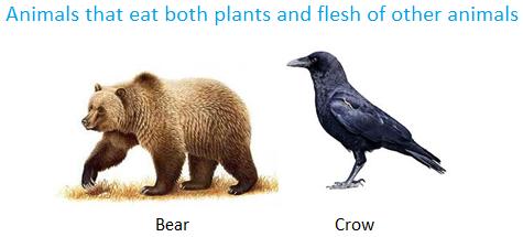 Animals That Eat Both Plants And Flesh Of Other Animals Animals Food Animals Bird Species