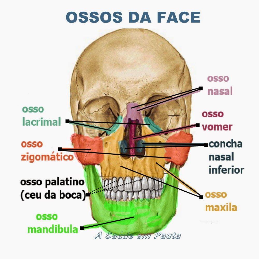 Ossos da cabeça - face   Corpo   Pinterest   Anatomía