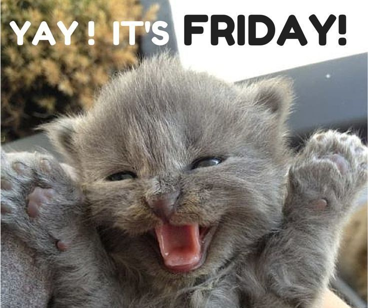 Funny Animal Friday Meme : Yay it s friday pictures photos and images for facebook