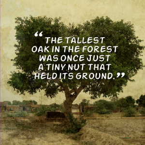The Tallest Oak In The Forest Was Once Just A Tiny Nut That Held Its Ground Quotes Feel Good Quotes Courage Quotes
