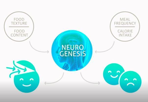Link between our brain, neurogenesis & mood | Brightness of
