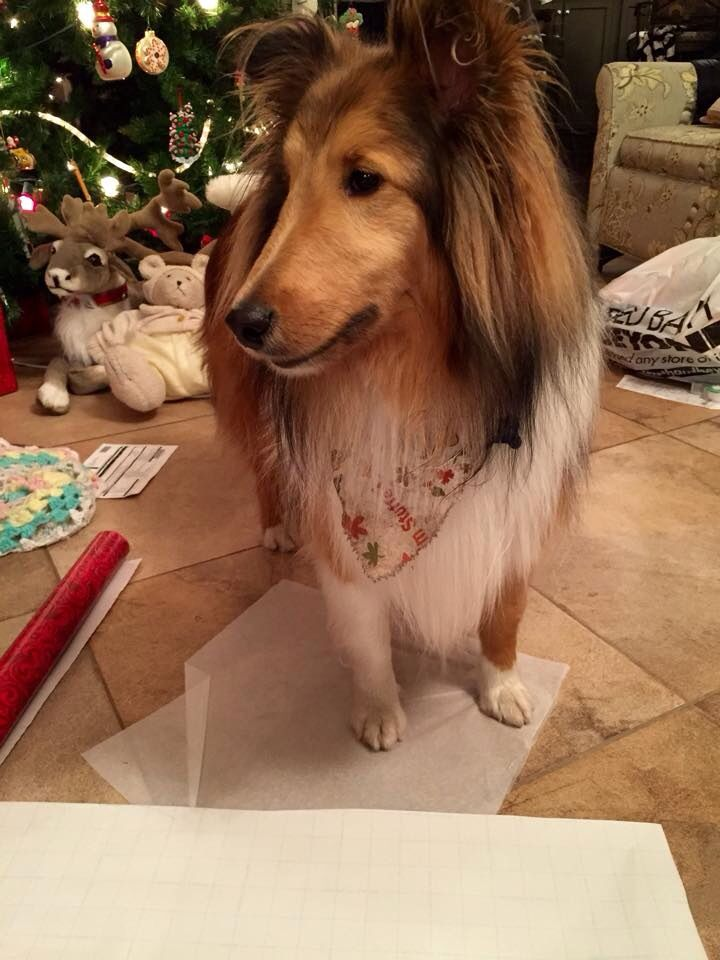 Helping Mom wrap gifts