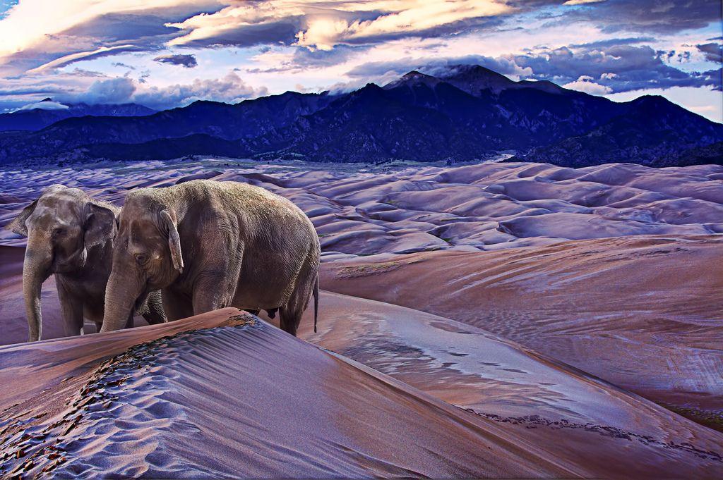 desert elephants ... photo manipulation