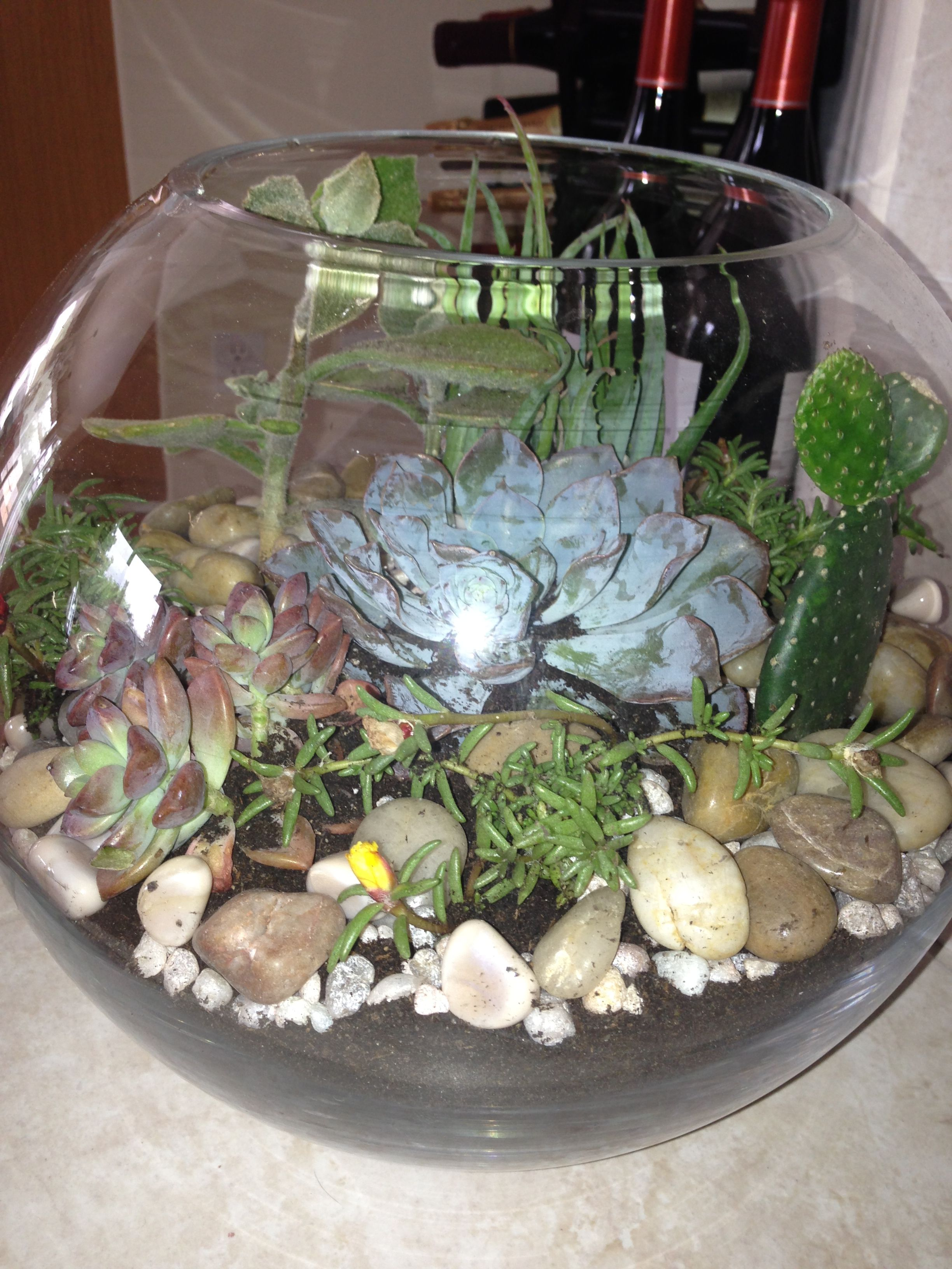 Glass Bowl Succulent Terranium Diy Ideas Succulents Garden