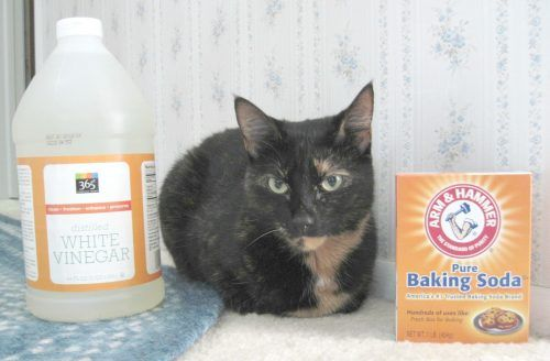 Cat-friendly cleaning products are simple and inexpensive alternatives to chemical household cleaners. They're safe to use around cats and better for the planet.