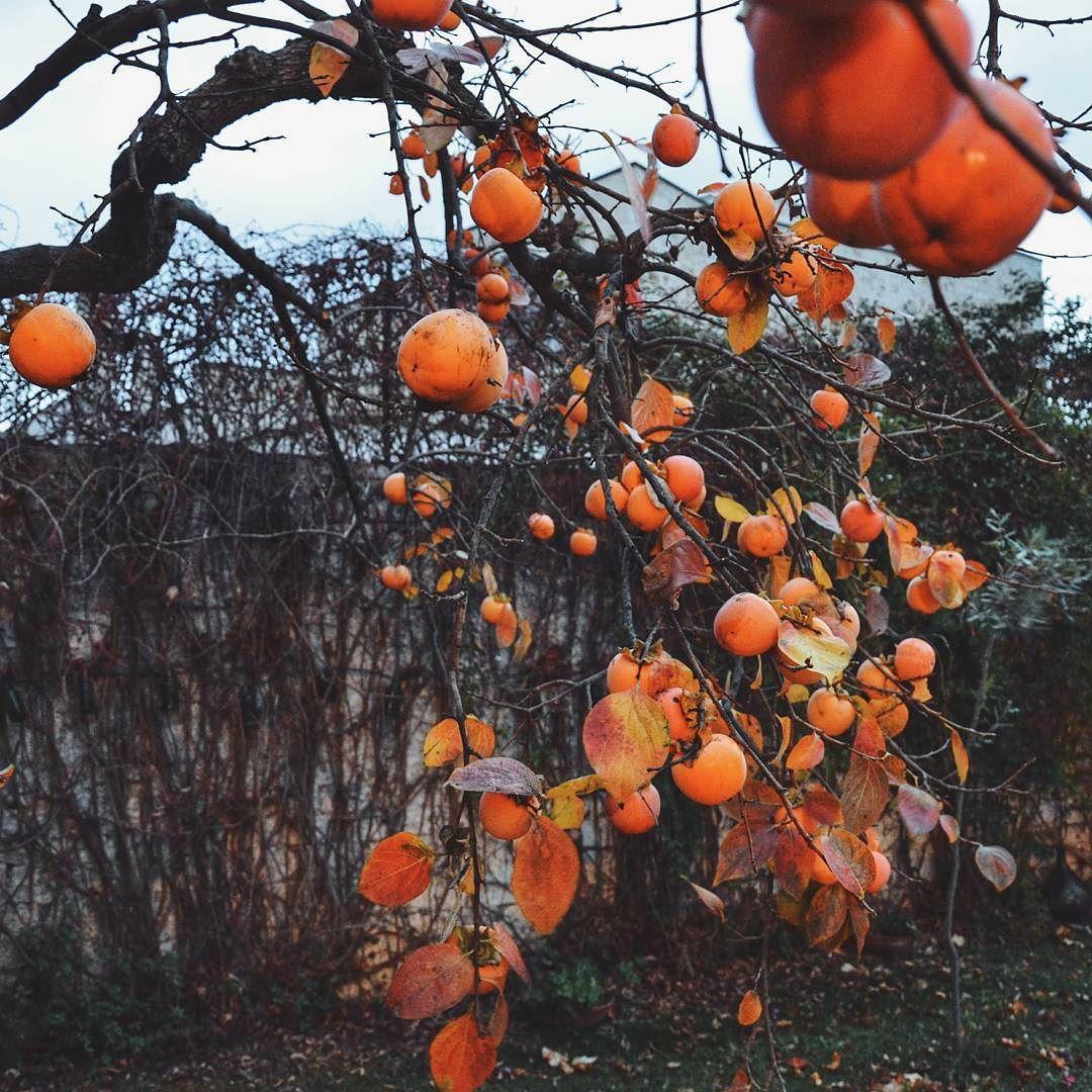 La stagione fredda ha i suoi colori. #365PugliaDays #ItalicaExperience #apuliasmartourism  Colors in the cold season. by viaggiovero