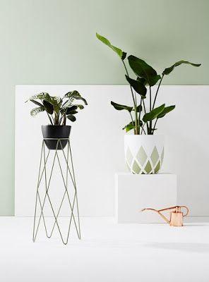 Mis plantas en un pedestal