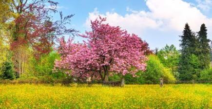 41 Ideas Desktop Wallpaper Nature Trees Spring #springdesktopwallpaper