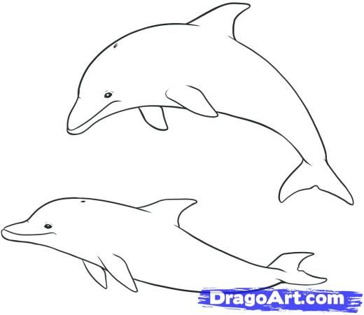 How To Draw Dolphins, Step by Step, Drawing Guide, by