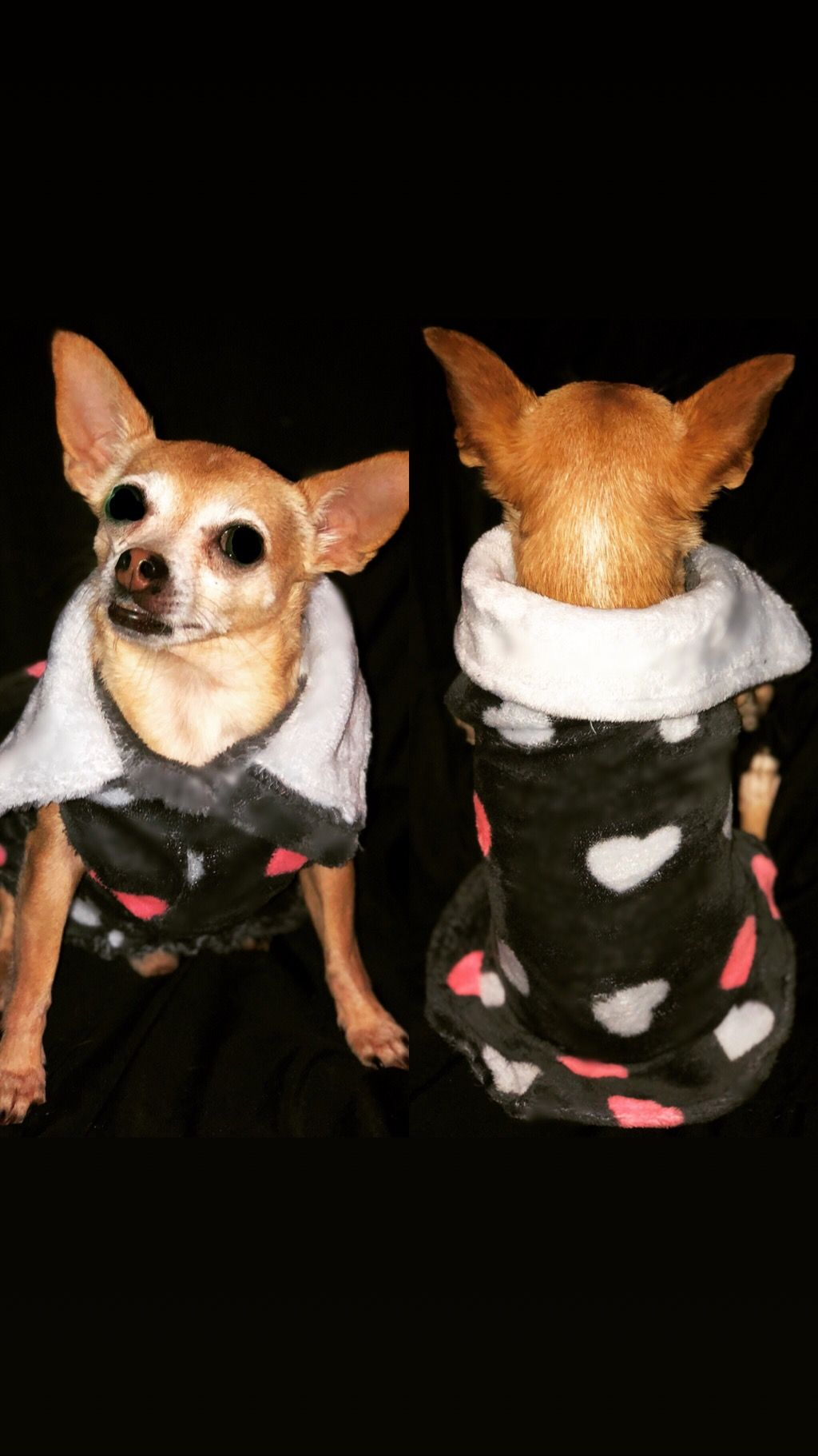 PJs for dogs and sphynx cats Sphynx cat, Dogs, Dog cat