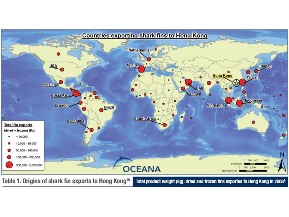 A map which shows which countries export shark fins to hong kong a map which shows which countries export shark fins to hong kong gumiabroncs Images