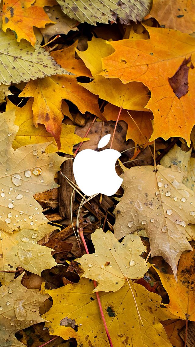 Iphone 5 Wallpaper Iphone Wallpaper Fall Fall Wallpaper Apple Logo Wallpaper