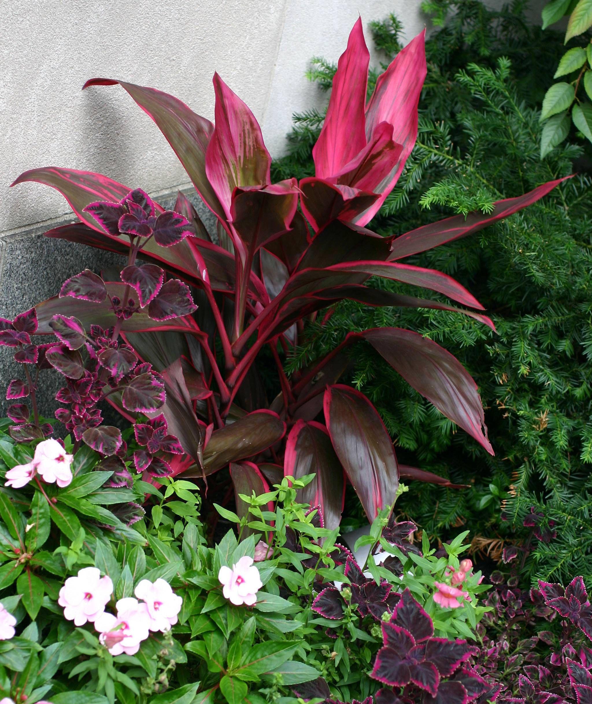 Http I Pbase Com U46 Hjsteed Upload 35290287 041009047 Jpg Plants Landscaping Plants Planting Flowers