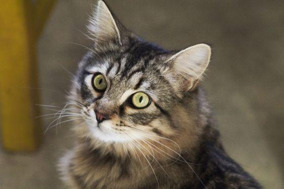 10 Ideas De Gatos Gatos Perro Gato Amantes De Los Gatos