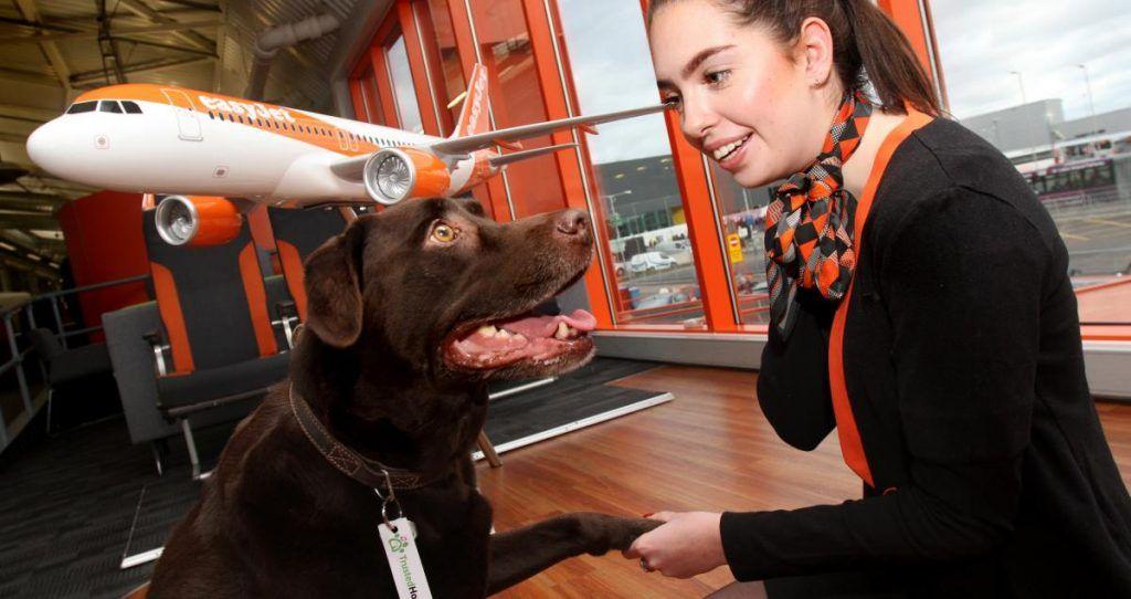 Easyjet Teams Up With House And Pet Sitting Business Trustedhousesitters To Make It Easier For Pet Owners And Animal Lovers To Travel Pet Sitting Business Pet Owners Pets