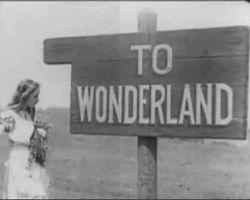 wonderland please