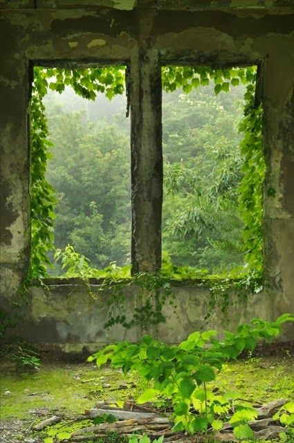 magic view through the window blogger pixz abandoned abandoned houses abandoned buildings. Black Bedroom Furniture Sets. Home Design Ideas