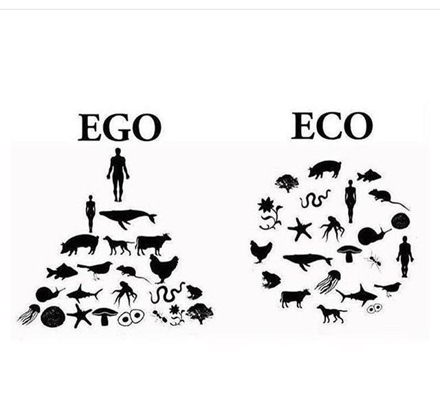Wife just sent me this image, succinct and appropriate - Ego vs Eco