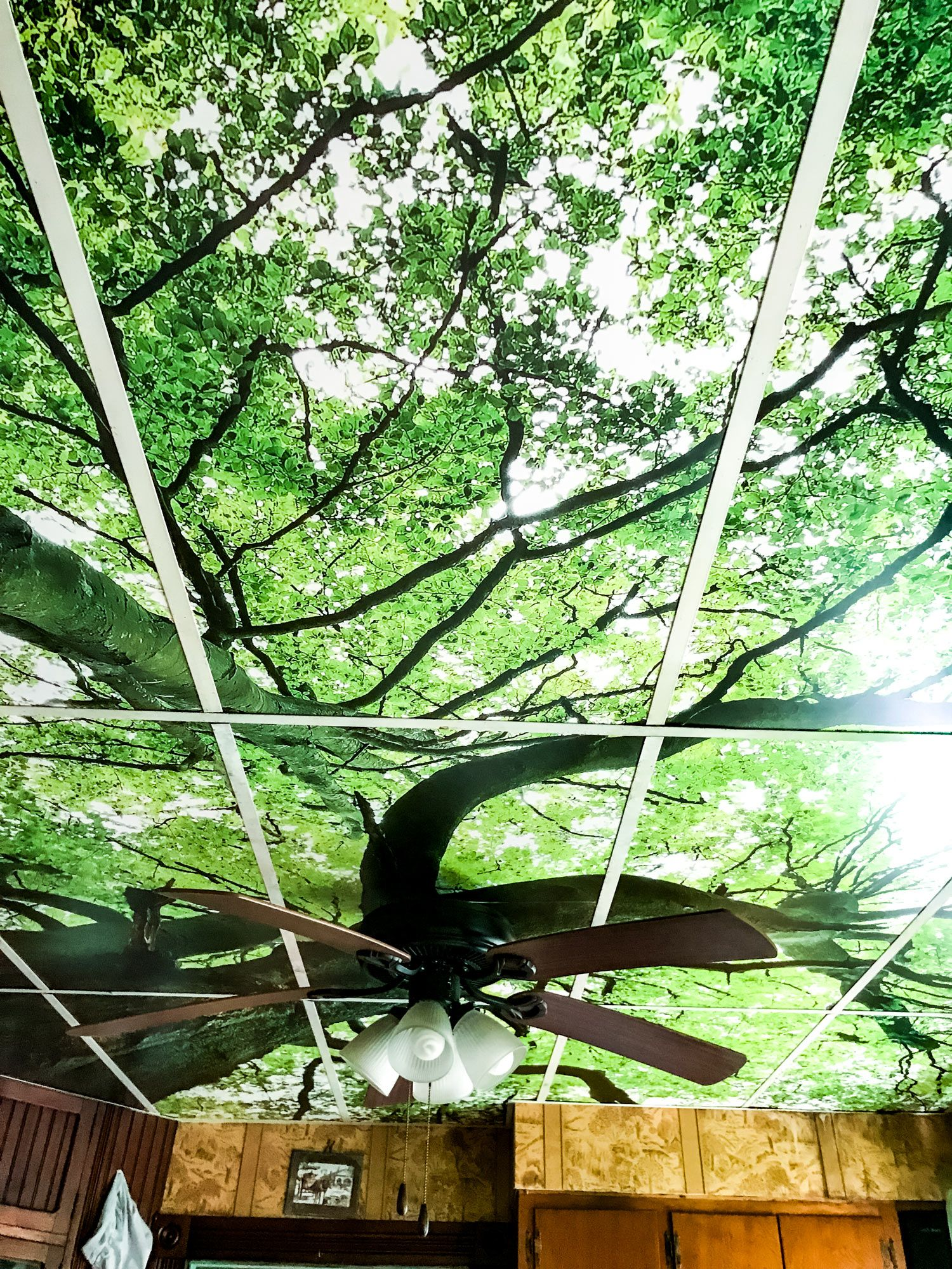Forest Tree Tops Farmacy Pinterest Ceiling Tiles Ceilings And