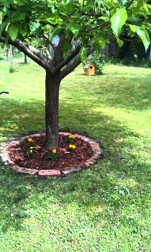 Little Flower Bed With Bricks Around Under The Apple Tree.