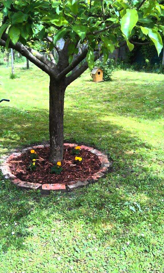 little flower bed with bricks around under the apple tree - Flower Garden Ideas For Under A Tree