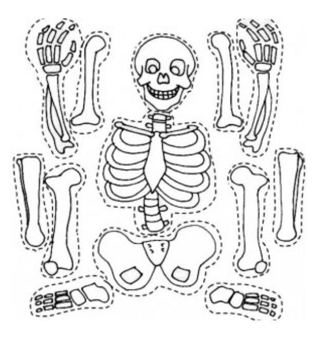 Pin de Àngels Ibarz en Cuerpo humano   Pinterest   Día de muertos ...