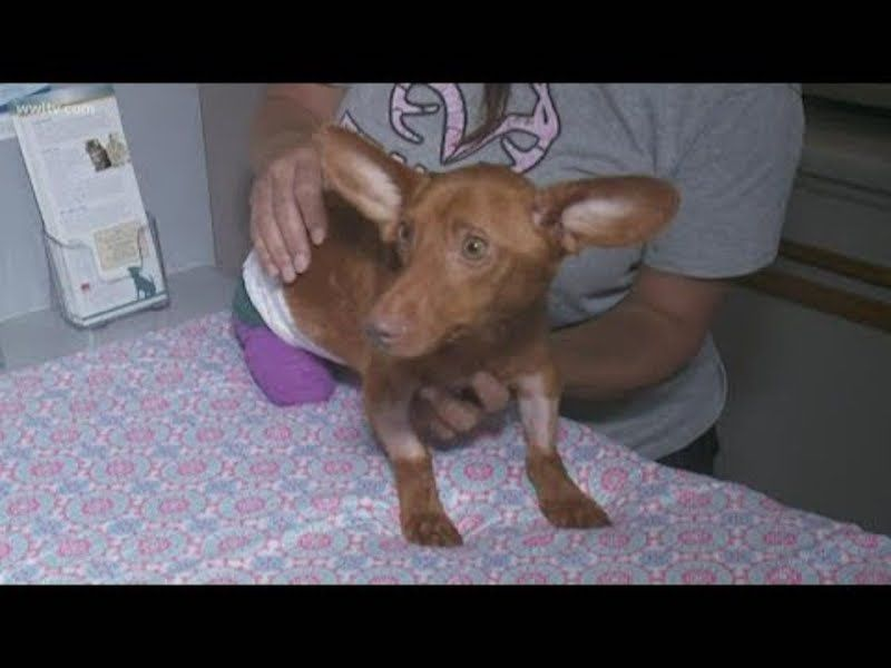 Sign This Petition Calling For Justice For Buddy The Dachshund