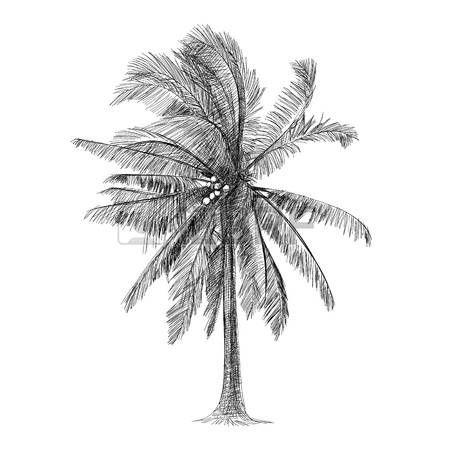 Black And White Tree Coconut Tree