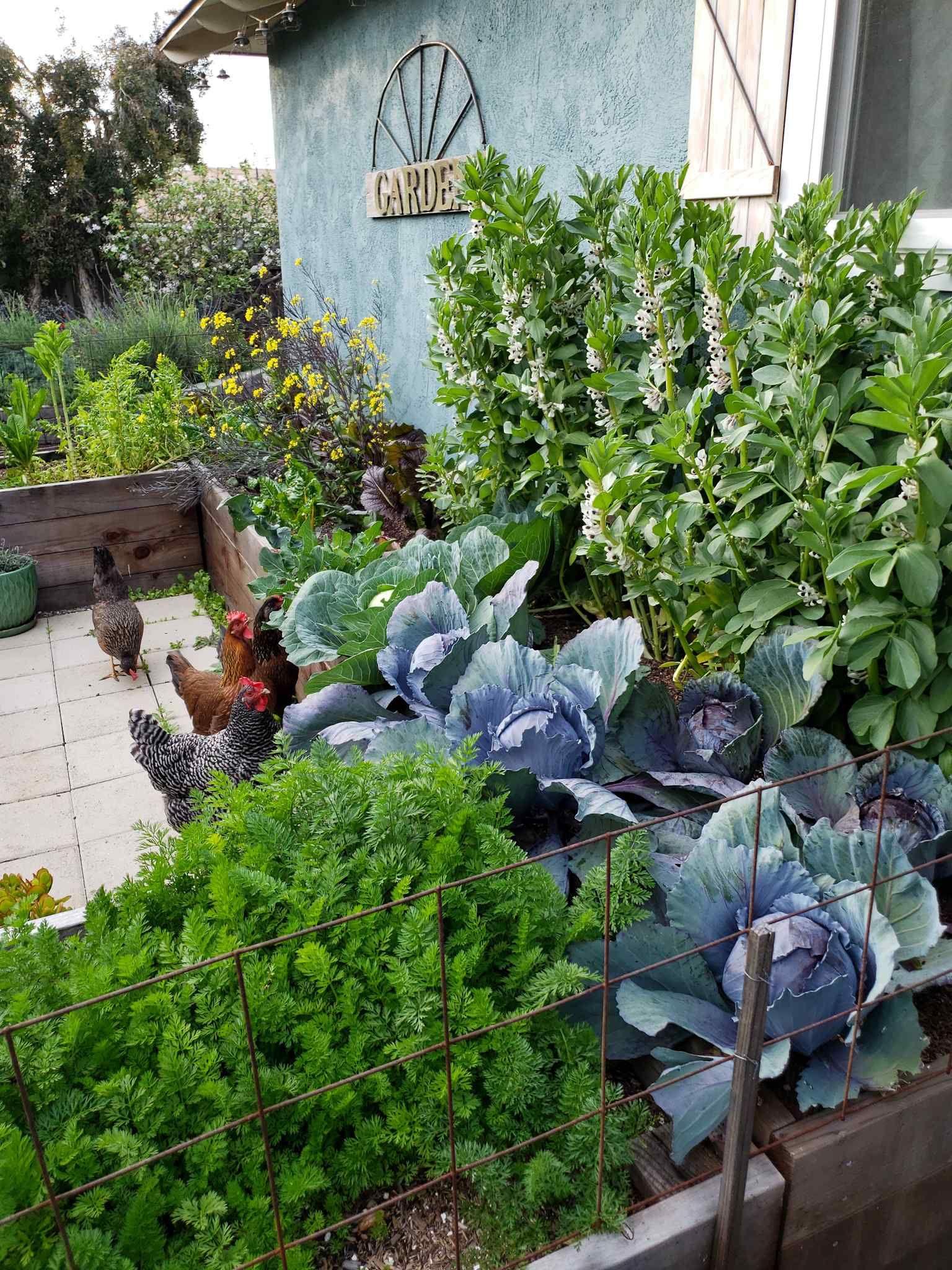Former Oklahoma Gardening host Ray Campbell the