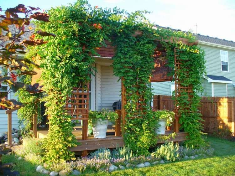 plantes grimpantes pour pergola 20 id es romantiques jardin pinterest pergola jardins. Black Bedroom Furniture Sets. Home Design Ideas