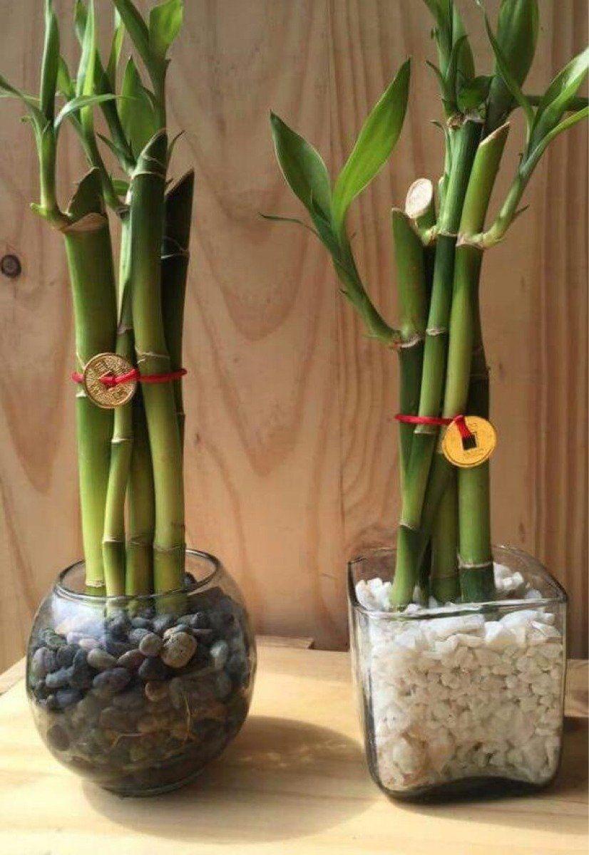 9 Plantas Para Atraer La Abundancia Suerte Y Prosperidad Planta De La Abundancia Planta De Lavanda Plantas De Bambú