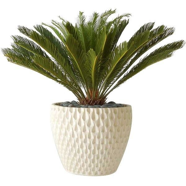 Skillfully Produced Using Proprietary Techniques, The Iconic Architectural  Pottery Pineapple Planter/Container Is Hand Crafted With Passion And  Integrity ...