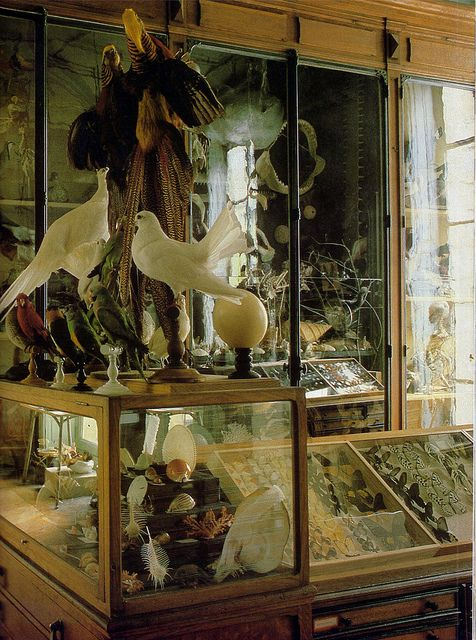 """""""The Last Taxidermist in Paris""""  From a series of photos taken for a 1985 article in World of Interiors about the Deyrolle taxidermy shop. All of the other photos are also beautiful, and you can see them and the accompanying article here."""